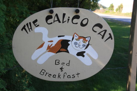 The Calico Cat Foto