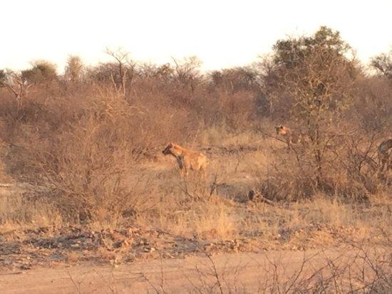 Thabazimbi, Güney Afrika: photo6.jpg