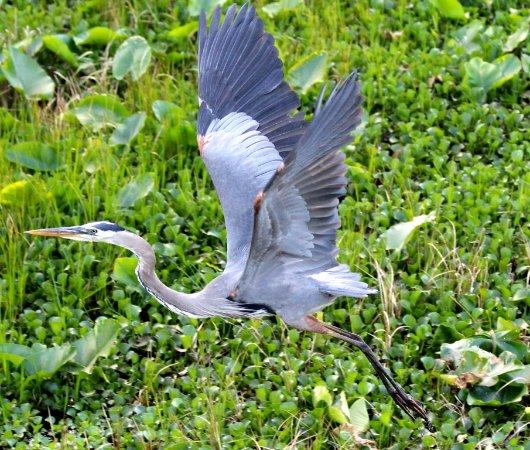 Adel, GA: Excellent Birding Opportunities