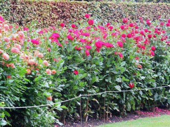 Anglesey Abbey: Dahlia Garden