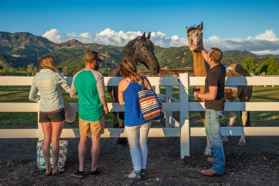 Admiring the horses at Tamber Bey, Calistoga