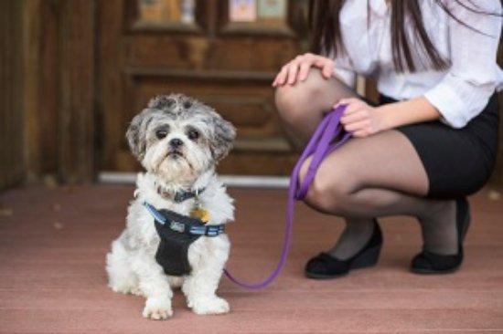 Maquoketa, IA: Pets Welcome