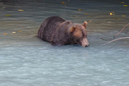 Кэмпбелл-Ривер, Канада: You can really get to watch the bears in their natural environment