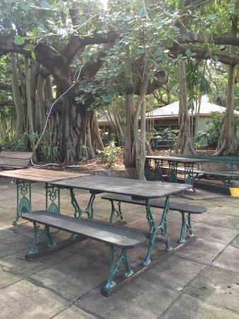 Rockhampton Botaniske hage og Dyrehage: photo0.jpg