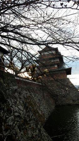 Takashima Castle: DSC_0661_large.jpg