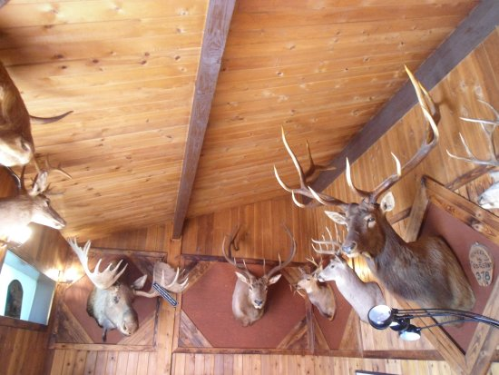 Bull River Guest Ranch : Loven it