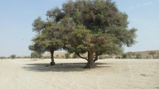 Riyadh Province, Arabie Saoudite : 20160909_083216_large.jpg