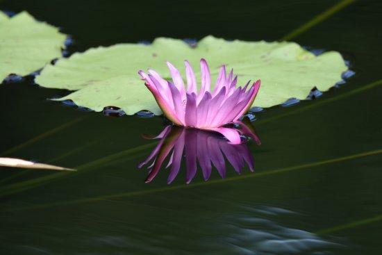 Jacksonville Zoo & Gardens: Flower Pond