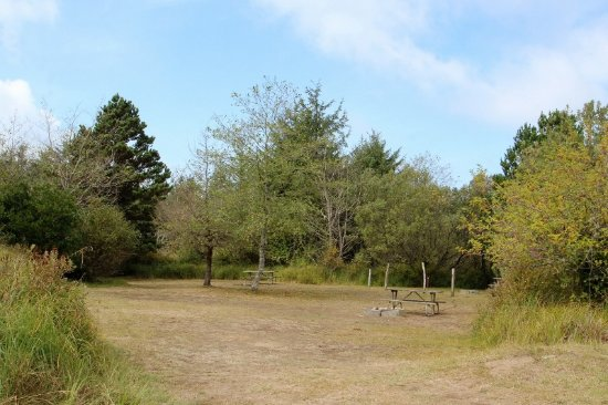 Seaview, WA: Large picnic area for groups