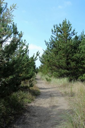 Seaview, WA: Trail leading to beach