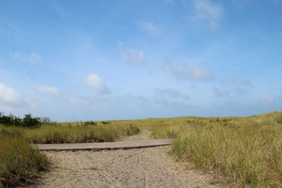 Seaview, WA: Trail leading to beach; paved section is Discovery Trail, great for bicyclists/walkers/joggers.