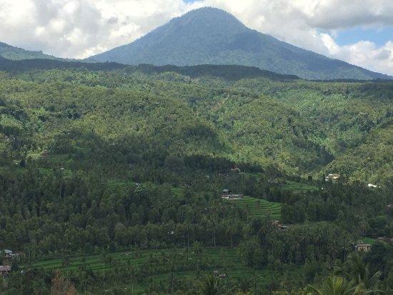 One Homestay: Déjeuner simple, bon et à prix léger avec vue panoramique sur les rizières au warung de One home
