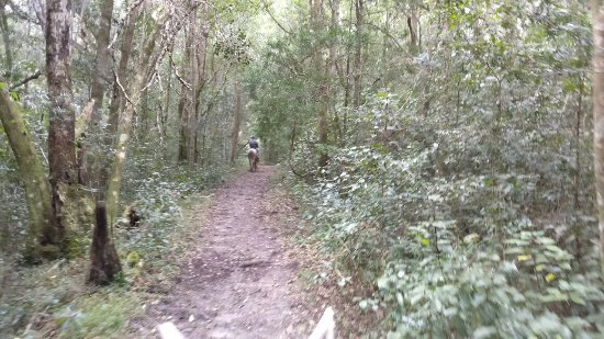 Wilderness, جنوب أفريقيا: IMG_20160910_104844_large.jpg
