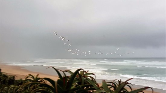 Wilderness, Sudáfrica: Flock of birds in the late afternoon