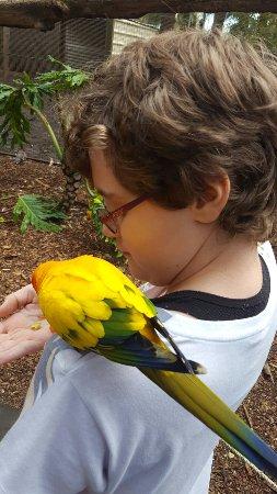 Pinjarra, Australia: 20160910_131248_large.jpg