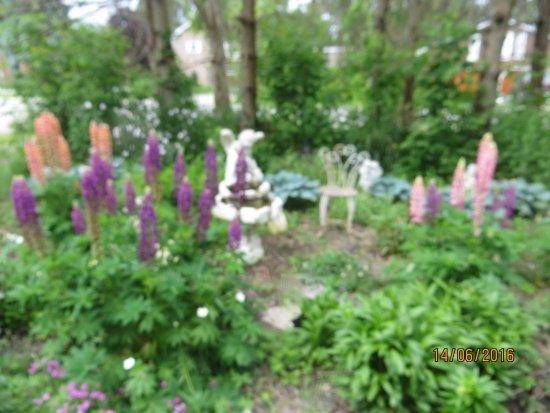 Owen Sound, Canada: Spectacular Gardens in the Summer