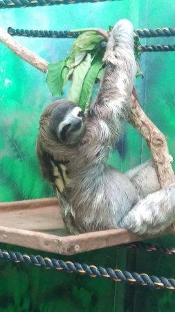 Sloth Sanctuary of Costa Rica (Aviarios del Caribe)照片