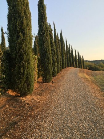 Tenuta Sant'Ilario: cypress road on the estate