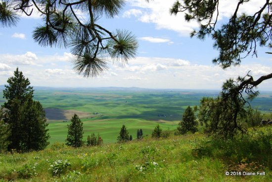 View of the Palouse taken from the Pine Ridge Trail hike on Kamiak Butte County Park.