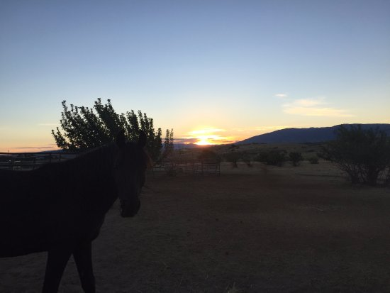 Elkhorn Bed and Breakfast: the horse and sunset.