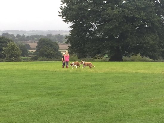Tean, UK: Children with Dodge and Pop