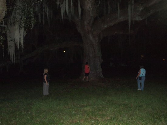 Bloody Mary's  Tours: Bloody Mary (left) with group near oak tree in City Park