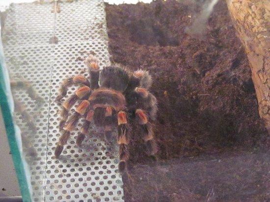 Insectarium,паук