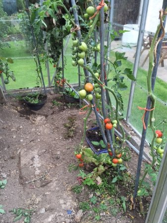 Greenacres Guesthouse: Margaret's very productive greenhouse.
