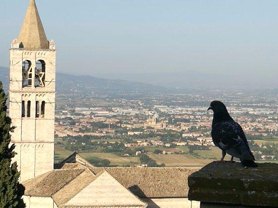 Hotel Ideale: Anche i piccioni guardano il panorama dall'hotel.