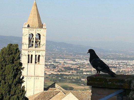 Hotel Ideale: Il piccione si gode il panorama.