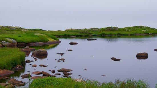Red Bay, Canadá: Pond on Saddle Island