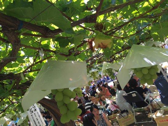L'orient Wine Shirayuri Brewery