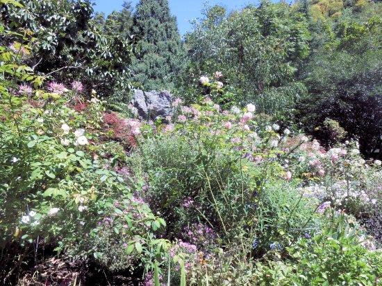 Eden Garden照片