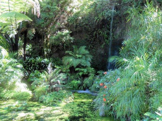Eden Garden: La cascade