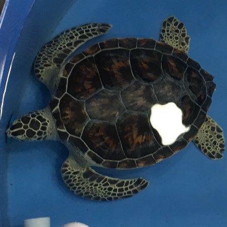 The Karen Beasley Sea Turtle Rescue and Rehabilitation Center : photo2.jpg
