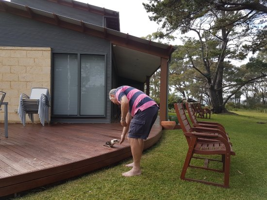 Sanctuary Point, Australia: greg who gives food to a bird. No fear :-)