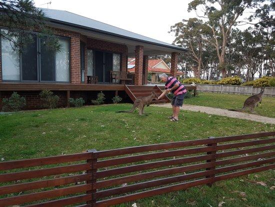 Sanctuary Point, Australia: and now to a kangaroo