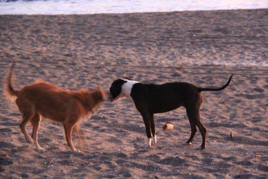 Las Penitas, Nicarágua: Dolly and Kiwi on the beach.