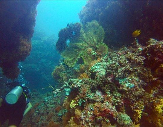 Rakiraki, Fiji: Gregorian fan coral