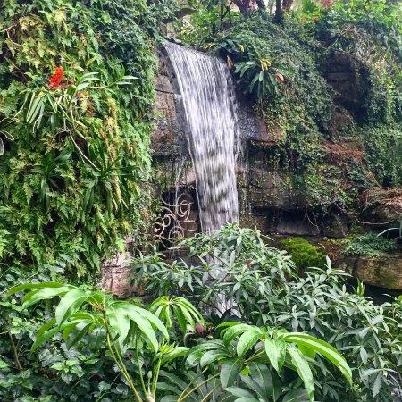 Gaylord Opryland Resort Gardens: Waterfalls at the Gaylord gardens
