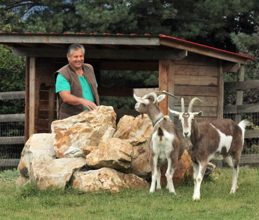 Swiss Lodge B&B: Mauro and the goats at Swiss Lodge