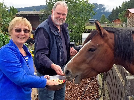 Swiss Lodge B&B: Feeding the horses