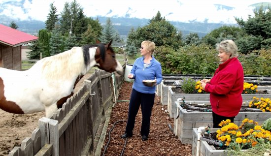 Swiss Lodge B&B: Feeding the horses with Lottie