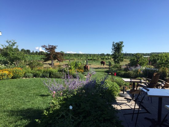Beamsville, Canada: Just a peaceful view