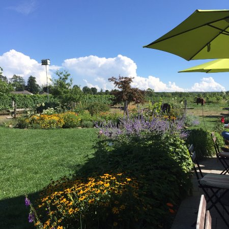 Beamsville, Canada: Could sit here all day.....
