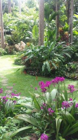 Hunte's Gardens: 20160901_143011_large.jpg