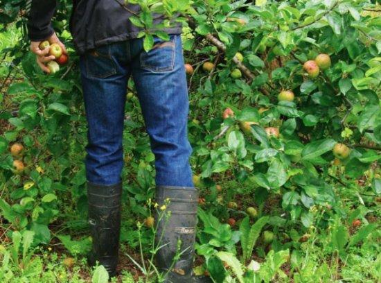 Blackheath, Australia: orchard