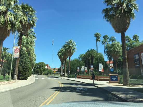 University of Arizona: palm trees