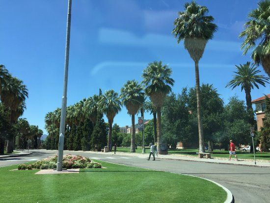 University of Arizona: trees