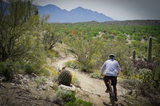 ‪Tucson Bike Rentals and Tours‬